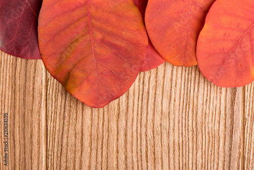 Photo autumn leaves on the boards