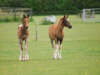 Two Cute Foals