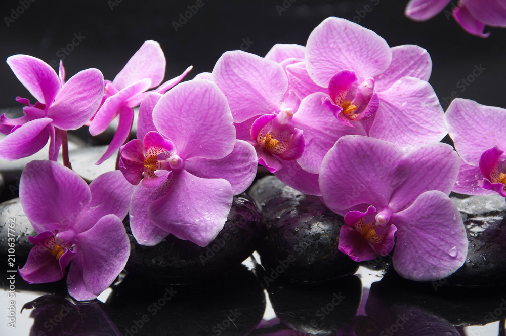 Wet black stones and lying on branch pink orchid