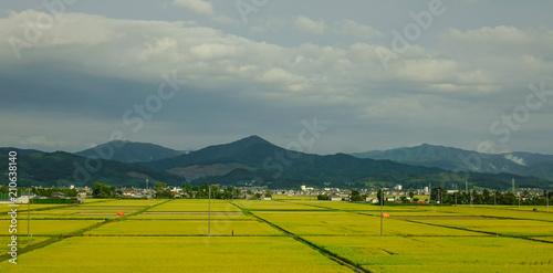 Poster Donkergrijs Rice field in Sendai, Japan