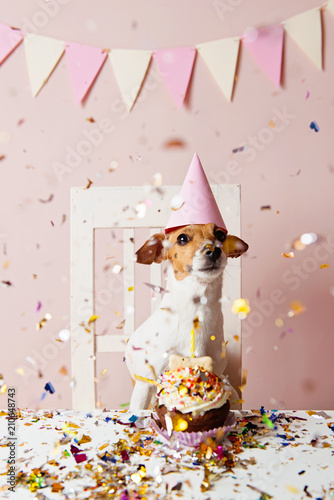 Photo  Cute dog with a party hat celebrating her birthday, confetti falling
