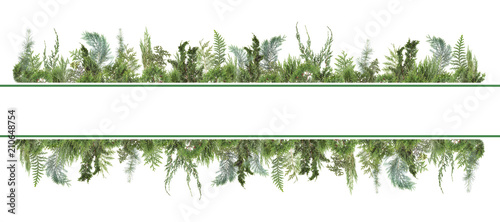 adorable arranged background with different kinds of fresh green isolated conife Fototapeta