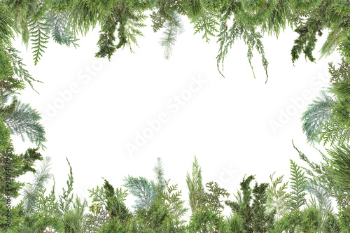 Fotografiet adorable arranged background with different kinds of fresh green isolated conife