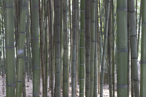In de dag Bamboo Bamboo trees forest pattern