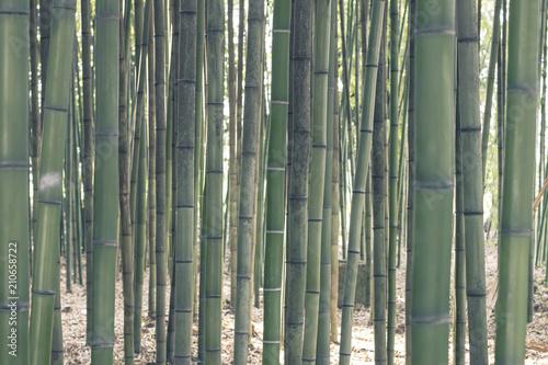 Foto op Plexiglas Bamboe Bamboo trees forest pattern