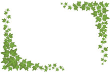 Decorative Green Ivy Wall Climbing Plant Vector Frame