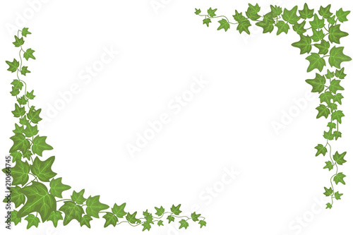 Obraz Decorative green ivy wall climbing plant vector frame - fototapety do salonu