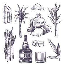 Hand Drawn Cane Leaves, Sugar ...