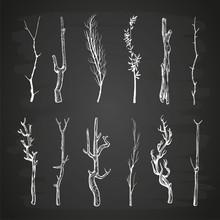 Sketch Wood Branches Set On Blackboard