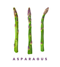 Three Isolated Watercolor Sprigs Of Asparagus. Eco Food Illustration On White Background. Healthy Vegan Food Design. Decor For Packaging, Cards And T-shirt.