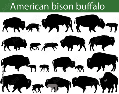 Photo Collection of silhouettes of american bison, or buffalo