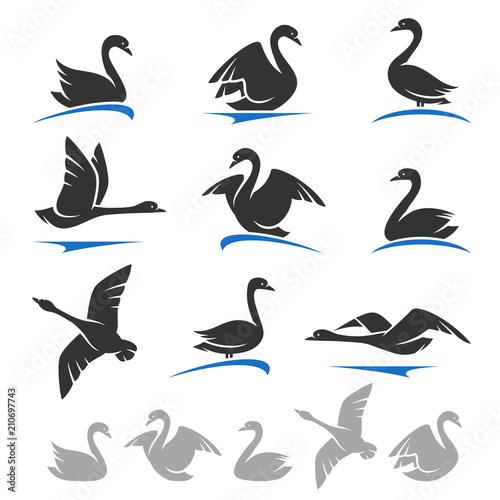 Fototapeta premium Swan set. Vector
