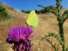 Farfalla Sul Fiore Del Cardo S...