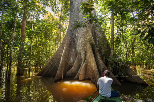 Photo A man in a canoe in front a Sumauma tree (Ceiba pentandra) with  more than 40 meters of height, flooded by the waters of  Negro river in the Amazon rainforest