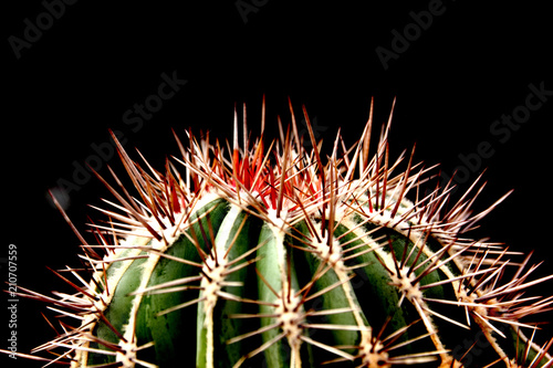 Foto op Canvas Cactus cactus thorn on black background