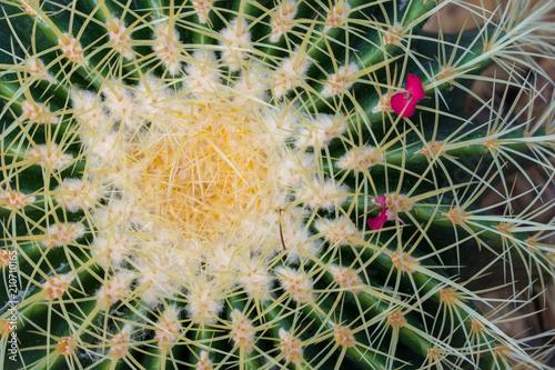 Keuken foto achterwand Cactus beautiful desert cactus plant