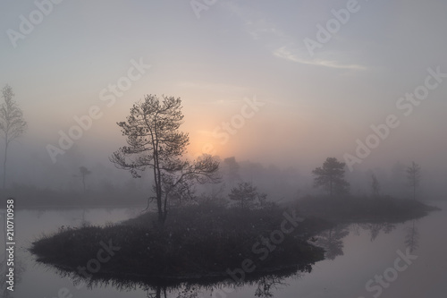 Fotografie, Obraz  Sunrise at swamp with small pine trees covered in early morning.