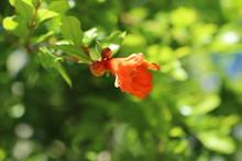Fleur Grenadier