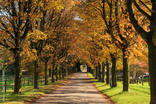 Foto op Canvas Herfst Allee im Herbst, Deutschland