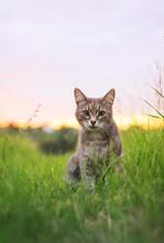 Cute Beautiful Striped Kitten...