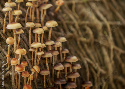 Fotografie, Obraz  Woodland fungi