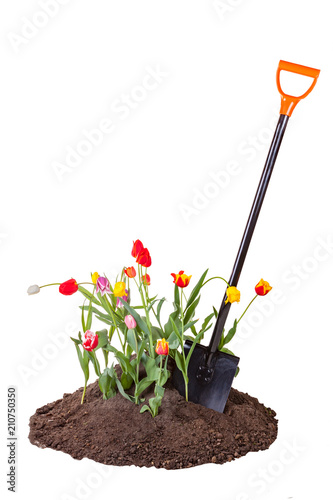 Shovel in the flower bed isolated