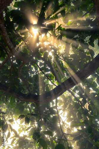 Wall Murals Forest tree and the first rays of the sun in the morning