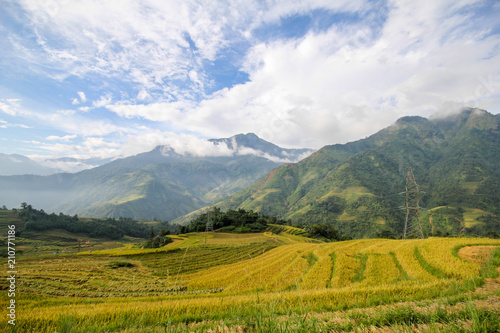 Deurstickers Bleke violet Rice fields on terraced of Sapa, Sapa District, Lao Cai Province, Northwest Vietnam