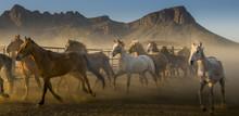 Galloping Horses Herd