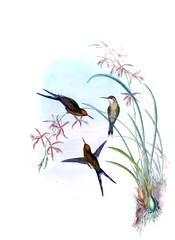 Obraz na SzkleIllustration of a Hummingbird.