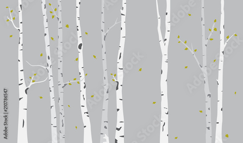 Fotografija Birch Tree Silhouette Background