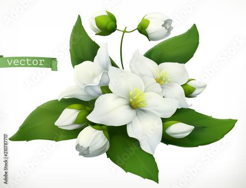 Платно Jasmine. 3d realistic vector icon