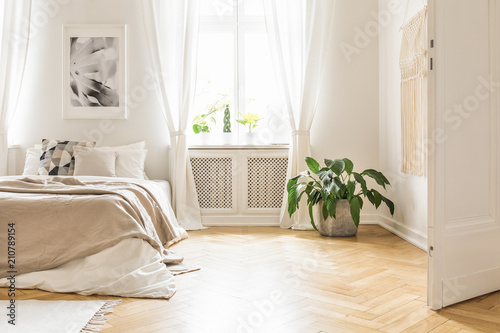 Obraz Plant near bed with blanket in white bedroom interior with poster next to window. Real photo - fototapety do salonu