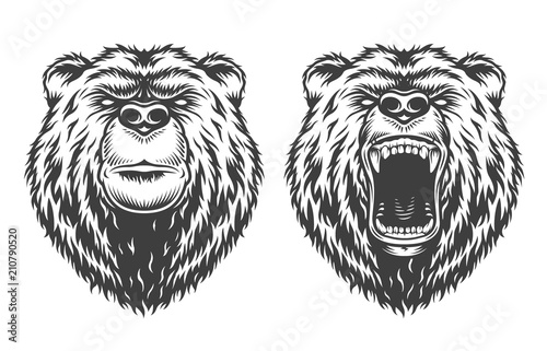 Poster Croquis dessinés à la main des animaux Vintage logo style bear
