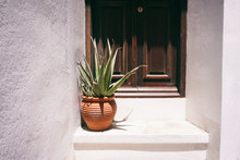 Old Entrance Door With Huge Aloe
