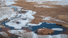 Animals Peacefully Grazing Near A Frozen Lake In The Mountains