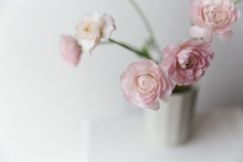 Pink Ranunculus In A Grey Desi...