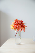 Red, Yellow And Orange Dahlia Flowers Picked From The Garden And Displayed In A Glass Vase In A Light Interior.