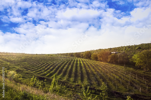 Papiers peints Vignoble field with grapes against the beautiful sky
