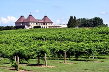 Winery Vineyard Landscape At N...