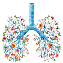 Illustration Of Lungs With Blo...