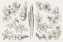 Big Set Of Monochrome Vintage Flowers Vector Elements, Botanical Flower Decoration Shabby Chic Illustration Blossom Almond And Dog Rose Isolated Natural Floral Wildflowers Leaves And Twigs.