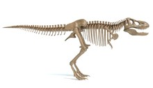 3d Illustration Of A T-rex Ske...