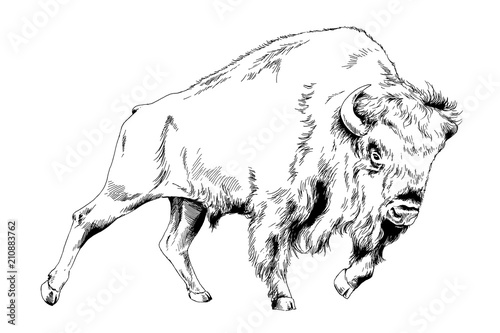 Photo  powerful huge Buffalo with horns drawn in ink freehand sketch tattoo