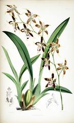 Plakat Illustration of flower