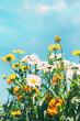 Leinwanddruck Bild Summer flowers against a blue sky