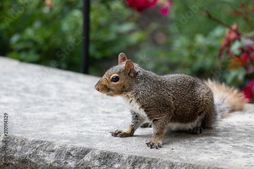 Keuken foto achterwand Eekhoorn Squirrel