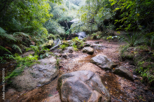 Fototapeta Foggy morning at South Lawson five waterfalls circuit in Blue Mountains, Austral