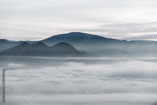mgla-nad-lasem-w-minimalistycznej-fotografii
