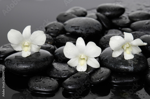 Still life with three white orchid with therapy stones
